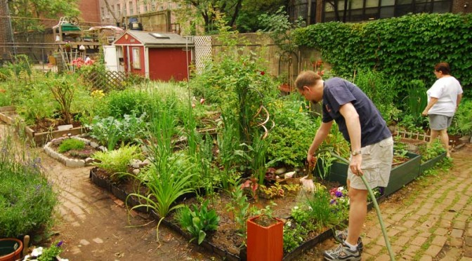 Benefits of Community Gardens: More Than You Think