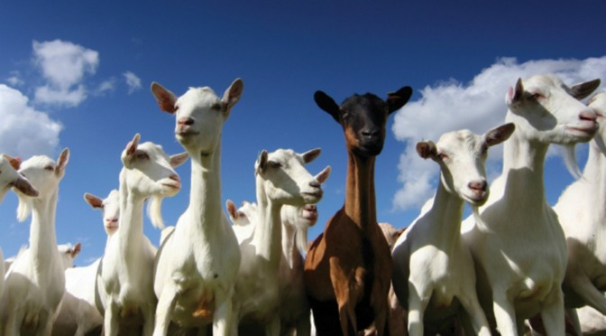 A Preppers Guide to Goat Breeds