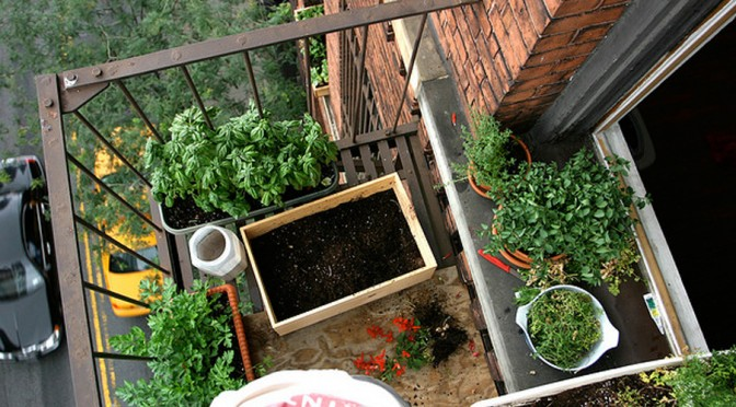 Urban Gardening Tips: Ensure Your Food Supply Even in the City
