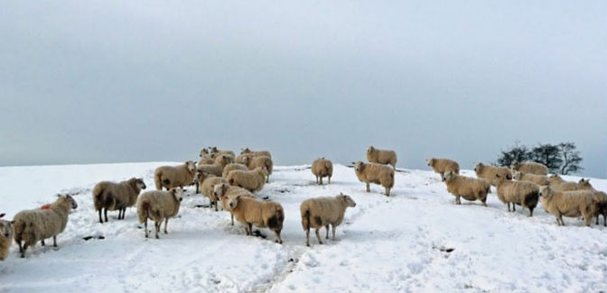 Caring for Livestock in Cold Weather